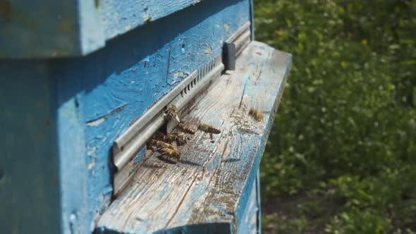 Thumbnail for Bees Flying In And Out Beehive 25