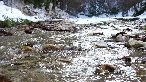 Thumbnail for Close Up View Of Autumn Creek Flowing At The Autumn Forest 3
