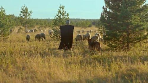 Shepherd in a Cloakburka Grazes Sheep a Dog Walks Next to Him