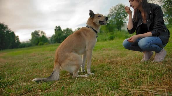 Woman Teaches Her Dog To Sit Command in the Park.