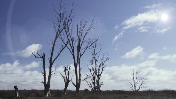 Thumbnail for Dead Trees in the Sunshine Against a Blue Sky.