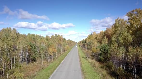 Thumbnail for Nice Aerial View Yellow Birch Woods and Distant Car on Road