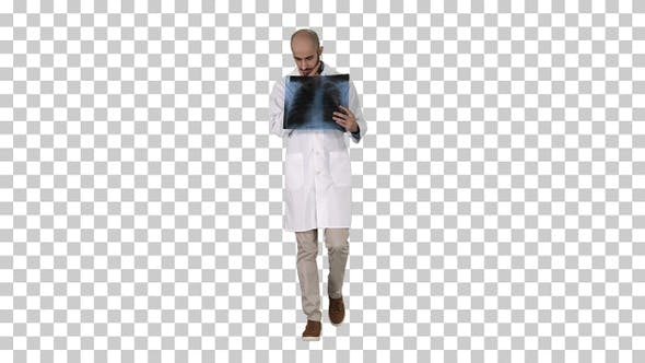 Cover Image for Doctor radiologist looking at x-ray scan walking, Alpha Channel