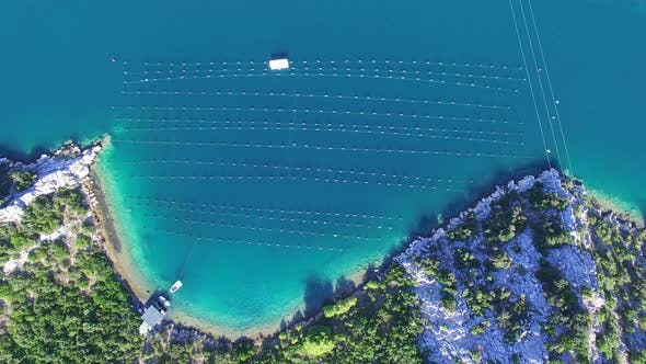 Thumbnail for Aerial view of shell farming in Croatia