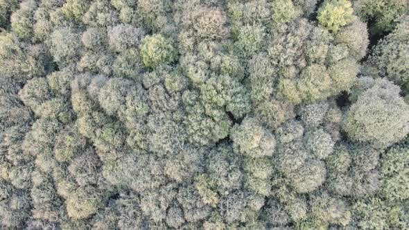 Aerial Drone Tree View