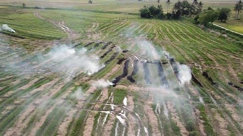 Rice straw open field burning