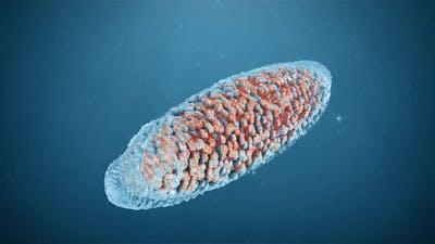 Macro Bacteria