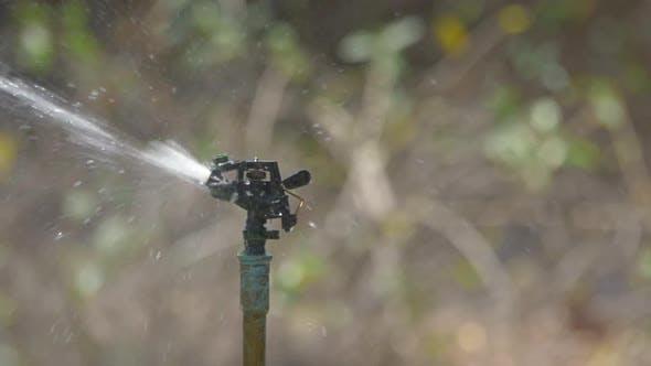 Thumbnail for Water Sprinkler