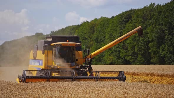 Thumbnail for Harvester machine on wheat field. Agricultural cereal harvest with combine harvester
