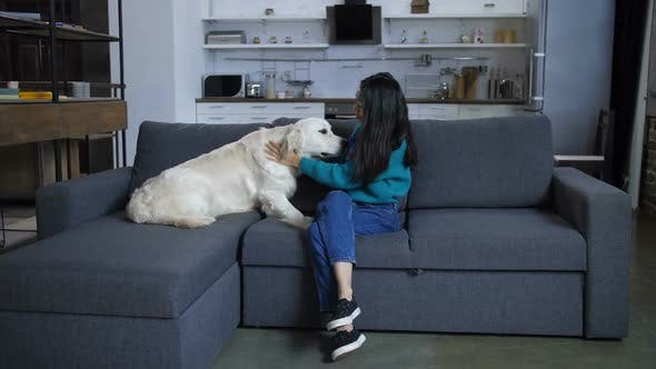 Thumbnail for Dog on Sofa Licking Young Indian Owner