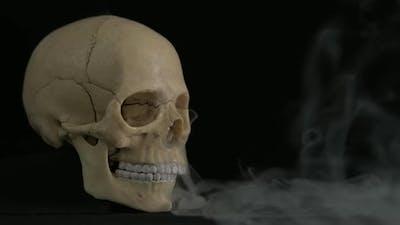 Creative Skull.