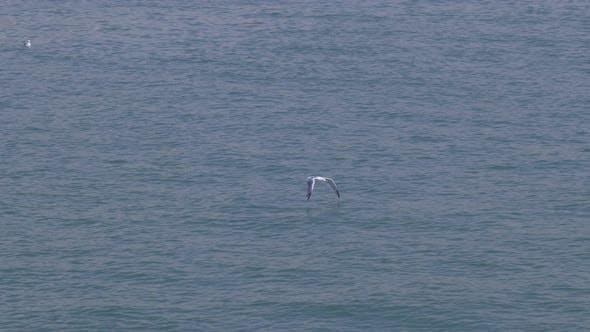 Seagull Fly Sea