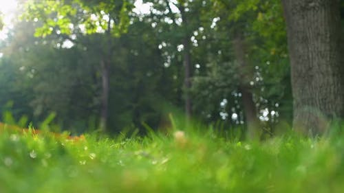 Green Grass and Trees in Beautiful Forest, Untouched Nature, Ecology Protection