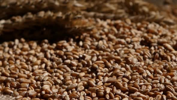 Thumbnail for Wheat Grains Agricultural Crop Harvest. Rotation. Close Up