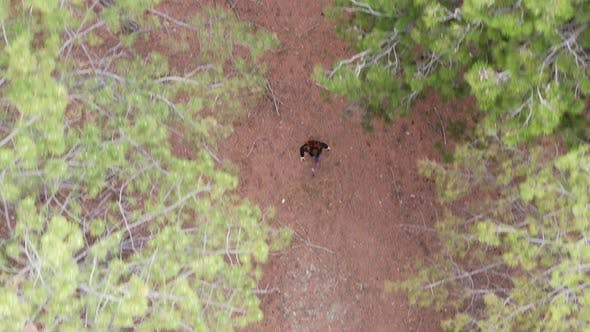 Thumbnail for A Woman Walks Through the Pine Forest View From Above