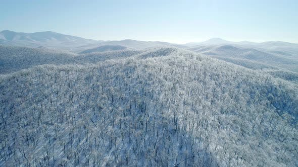 Aerial View of a Frozen Forest with Snow Covered Trees at Winter