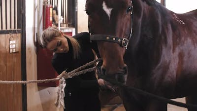 A Woman Brushes a Horse with a Brush