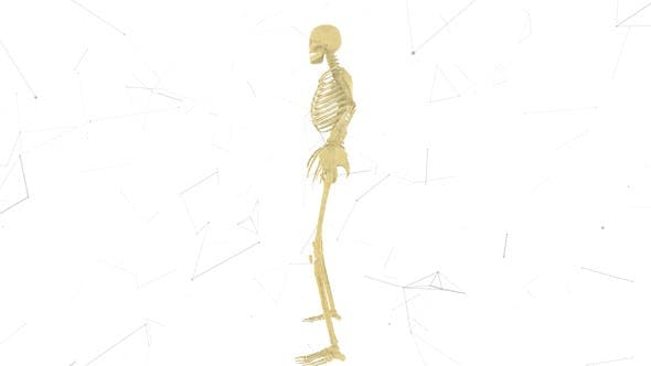 Man Skeleton System V2 Hd