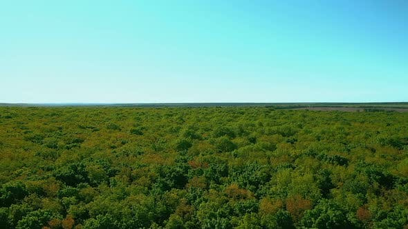 Thumbnail for View From a Quadrocopter Over a Large Green Forest. Green Foliage of Trees. Aerial View. Samara