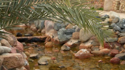 The Branch Of Palm Trees On a Background Of a Rivulet