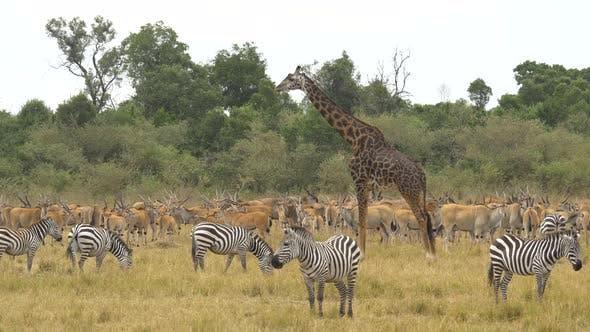 Animaux à Masai Mara