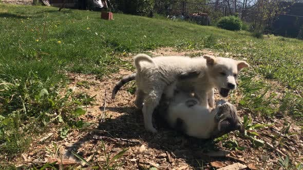 Close-up fight between puppy and kitty in the garden  1920X1080 HD footage - Domestic cat and little