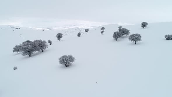 Thumbnail for Aerial Flying Through Trees In Winter Mountain Valley