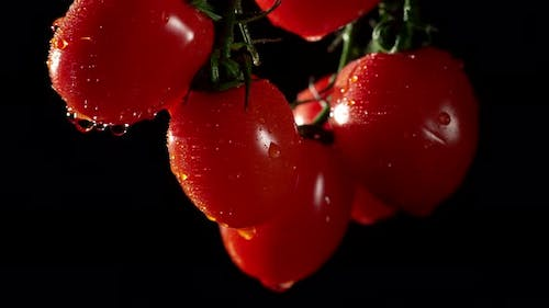 Cherry Tomatoes with Water Splash Drops at a Dark Background