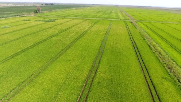 Aerial Shot of a Horizonless Green Agriculture Area on a Sunny Day in Summer