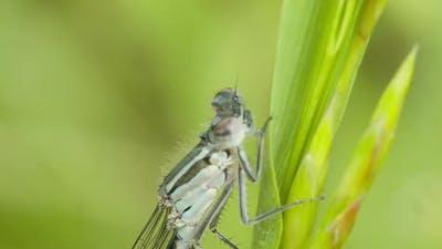 Locust 9