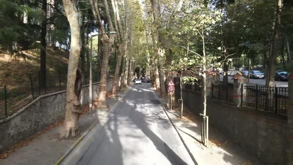 Tree Road City Traffic