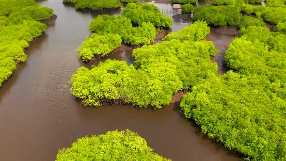 Thumbnail for Natural Landscape Aerial View of Mangrove Forests and Aboriginal Hut on the River's