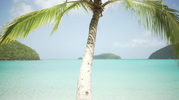 Thumbnail for Background Plate of Large palm tree extending over blue Caribbean ocean