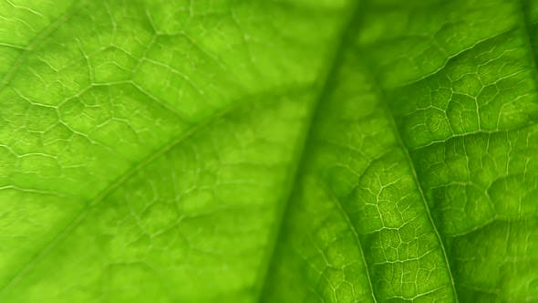 Thumbnail for macro leaf plant. close-up with capulars and plant structure. Biology.