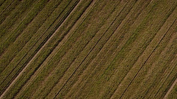 Thumbnail for Farmland Soil From Above