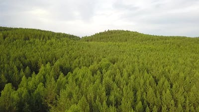 Nature Forest