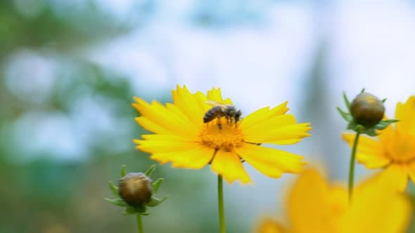 Flower With Insect