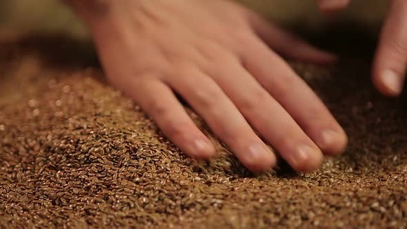 Thumbnail for Farmer checking quality of raw material for flaxseed oil, beauty and healthcare