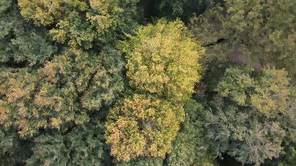 Drone Flying Above Naturel Forest