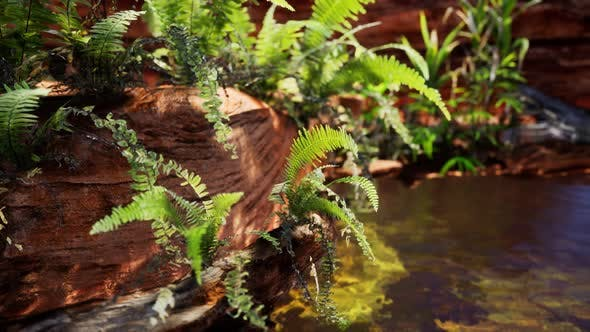 Thumbnail for Tropical Golden Pond with Rocks and Green Plants