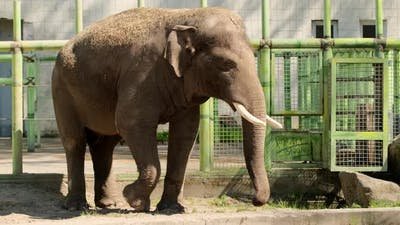 Happy young indian elephant at zoo on sunny day