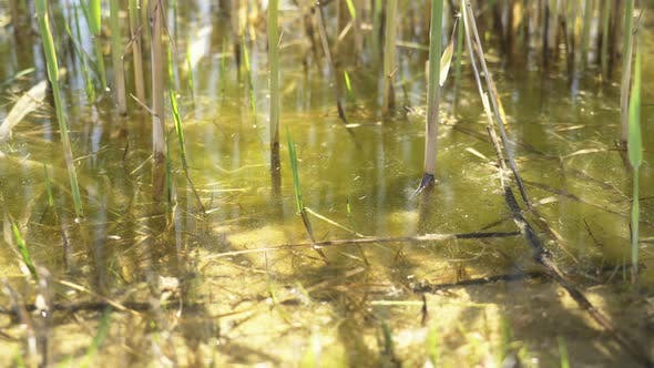 Wetland Reeds and Lake Surface