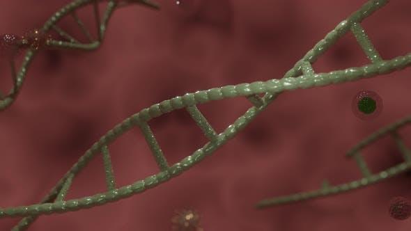 Coronavirus With ADN