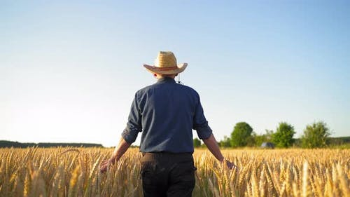Back view of a farmer