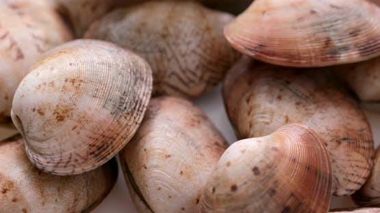 Fresh raw clam