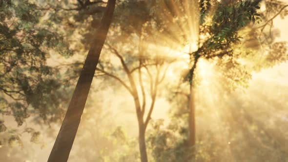 Thumbnail for Rays of Bursting Sunlight in a Misty Forest