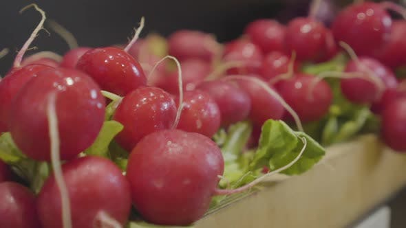 Thumbnail for Close-up of Delicious Vegan Red Radish on Grocery Shelf. Tasty Vegetarian Food for Sale in