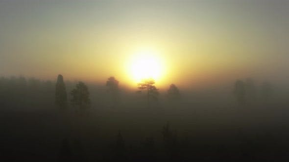 Enchanted Forest Fog