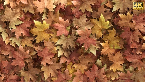 Leaves Transition