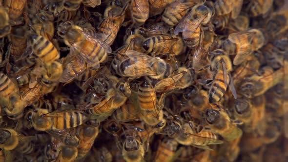 Thumbnail for Bienenstock Zeitlupe
